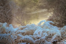 Seasons ~ Winter