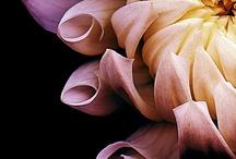 Flora / by Chris Durietz
