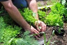 Gardening: It ain't no Farmville! / by Nate Werber