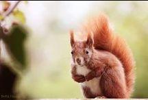 Tiere ~ Squirrels Eichhörnchen
