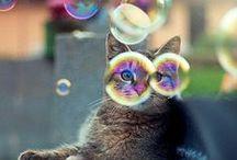 Miau! / Gatinhos, gatões, ronronadas e muitos miaus!