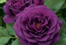 Flowers / Flowers I like! / by Karen Poole