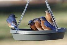 Attracting Your Favorite Birds