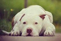 Dog / by Alea Kerr