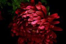 Fleur / by Darla Dorsey