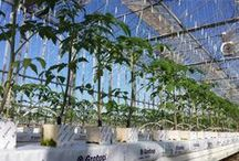 Hydroponics.gr / Hydroponic.gr is a web tool where all the experience and practical application of knowledge of DKG on hydroponic cultivation will be available for its customers and to the public. More  specific, this knowledge and experience  is based on rockwool substrates (Grodan products) and DKG's Know How.