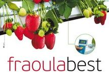 FraoulaBest / The hydroponic FraoulaBest© solution designed by the DKG Group in collaboration with the IRTC (International Research and Trainong Centre for Sustainability) under the philosophy of Total Greenhouse Management, and the initial experience of growing hydroponic lettuce (MarouliBest© solution). In recent years, the evolution of the system  occurs mainly in Cyprus