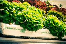 MarouliBest / The hydroponic MarouliBest© solution designed by the DKG Group in collaboration with the IRTC under the philosophy of Total Greenhouse Management. The MarouliBest solution has been applied in greenhouses in the Greek market in the last 8 years and has achieved the vision of producers,8 crop cycles per year. The products are ready for consumption without need washing. The result is a perfectly normal process and most importantly, from producers fully qualified, who comply with strict procedures.