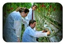 Total Greenhouse Management / Total Greenhouse Management® is DKG'S experience and know how methodology on 16 greenhouse hydroponic grown crops. This integrated service covers the whole chain form the farm to the fork (vase) from:   - Market research - Feasibility study - Greenhouse design - Selection of Suppliers - Project Management - Investors & Executives Education - Staff training & Crop Support - Hydroponics - Certification to  - Branding of the final product