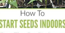 Seed Starting / Get steps for starting vegetable, herb, perennial or flower seeds indoors or outdoors, and saving garden seeds! Whether you have a setup in the house with lights and heat mats for germinating seeds, or a window ledge, you'll get easy DIY tips and growing hacks for beginners. Find everything from a calendar of dates, schedules, charts, guides and tutorials, to equipment (germination trays, pots, labels, fertilizer, soil, storage organizers), and how to avoid mistakes like over watering or mold.