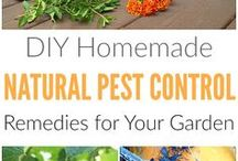 Garden Pest Control / Whether you're trying to naturally get rid of animals, prevent insects (like Japanese beetles, squash bugs, slugs and snails) from destroying your vegetable plants, or you're fighting diseases like powdery mildew in your garden, here you will find simple DIY tips and ideas for garden pest control methods that are safer for your health and the environment. Learn how to use natural remedies from eggshells and cayenne peppers to hand picking, and get DIY recipes for organic pest control sprays.