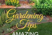 Gardening Tips & Ideas / Whether you want to garden indoors or in your backyard, you'll find tons of ideas, creative hacks, and simple tips and tricks for beginners and experts alike. From how to get rid of weeds and bugs using organic pest control methods, to mulches, compost, soil, pruning, seed starting, low maintenance gardening, easy and unique DIY projects, and more. Learn how to grow vegetables, herbs, beautiful flowers, tropical or perennial plants in containers, raised beds - for small spaces or large gardens.