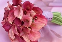 Flowers  / by Carolina Kist