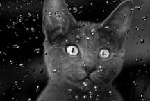 Cat Kitty Kitten