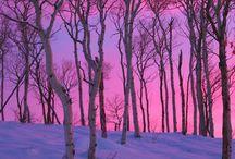 Gorgeous & Magical / by Allison Felus