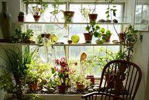 Huertos y jardines