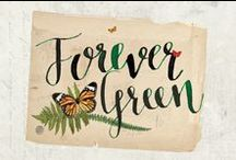 Forever Green Collection / Lush flora and beautiful fauna encompass our new Forever Green Collection! With rich colors, wonderful contrast, and realistic images this nature-filled line is sure to capture your attention. Unique embellishments really set this line apart with beautifully coordinating pieces diverse enough to use for any project, large or small.