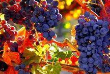 Winery / El Mundo del Vino