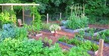Edible Gardening / Edible gardening ideas and recipes to to make the most out of your harvest.