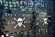 Changing Leaves and Ghoulish Fun  / Fall and Halloween inspired / by Garden Design