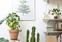 plants and flowers / All about plants and flowers for interiors and the home