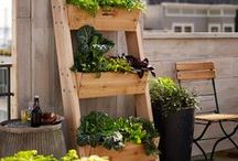 Vegetables and herb garden