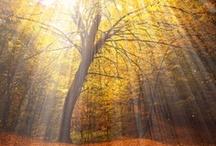 Rays of Light / by wunderground.com