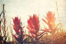 Summertime / Favorite Season <3 Summer Lovin