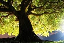 Trees / by Shannon Joy