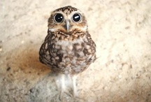 PETS ▶ Owls 1 / by Positive Mia