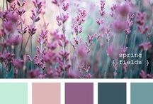Color Schemes / by Mindy Mew