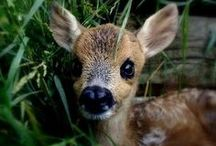 · oh d℮℮r · / who doesn't love bambi?