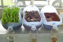 Green Living / How to lead a green life, hopefully with a green thumb!