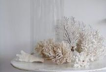 Collect - Coral / Collecting and decorating with coral