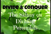 In the Ohio Garden / Tips and methods for Ohio vegetable gardening.