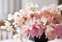 Blooms / Cut flowers with the look of locally grown and garden fresh.