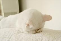 pets(ペット) / by suganao