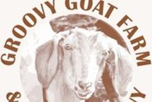 Groovy Goat Soap