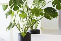 Decor - Planted / Indoor plants