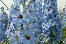 GARDEN - Plants for a Romantic Garden / Plants I love and have loved for a Romantic Garden