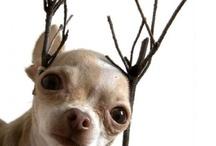 part 2 Christmas ideas / by Jana Dezeeuw