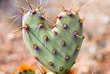 cacti love / by Jana Dezeeuw