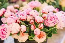In love with peonies