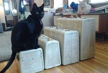❧Suitcases / I can't resist them!