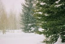 tis the season / by Rochelle Kurtz