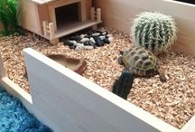 Turtle home