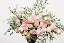 Flowers / by Jennifer Zimmerman