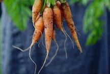 Gifted Gardening / ...