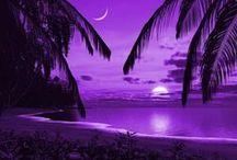 Shades of Purple / by Dawn Rix