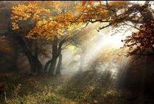 Trees / by Crissy Hughes